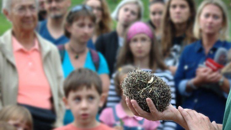 Zástupci města vypouštěli ježky zpět do volné přírody.