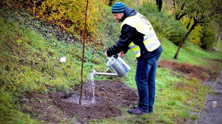 Praha spustí projekt adopce stromů