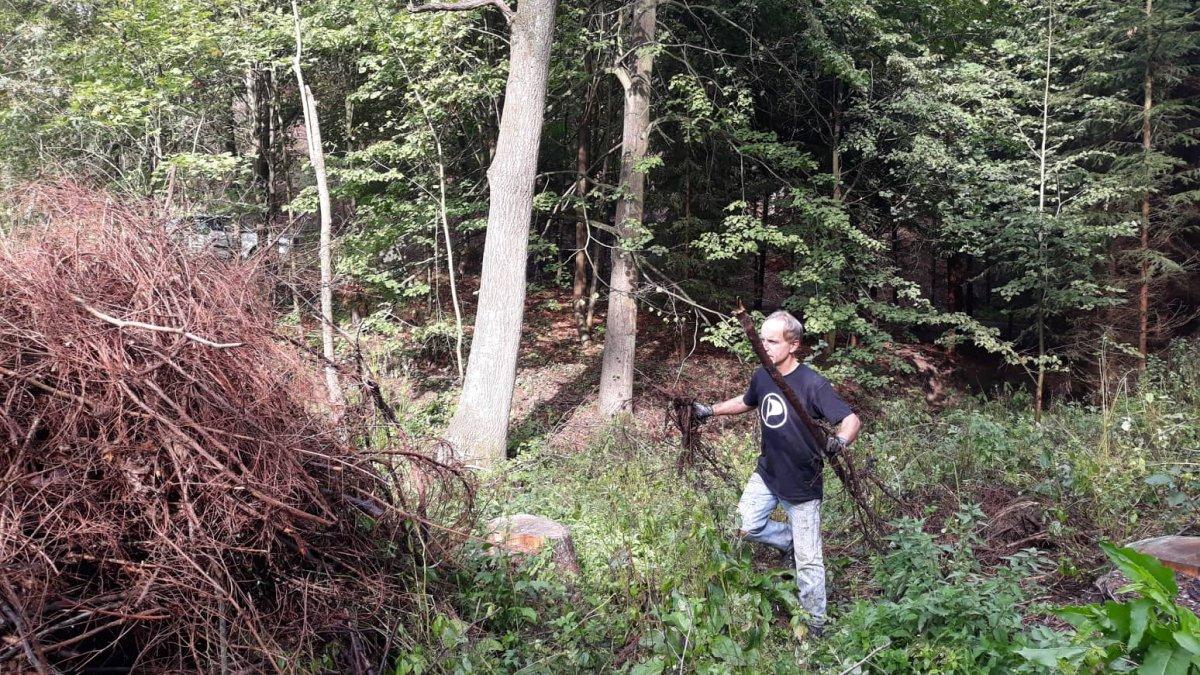 Místo pro nový les