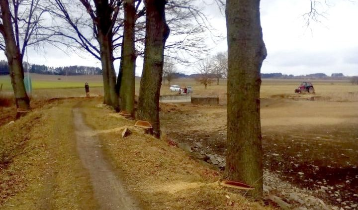 Nezákonné a arogantní kácení na hrázi Hrejkovického rybníka