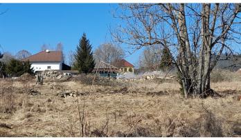 Developer na Chlumu kácí vzrostlé stromy bez povolení