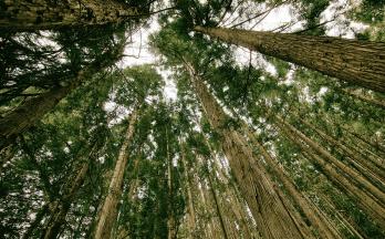 Piráti Holomčík a Mamula: Chceme akci podpořit a také upoutat pozornost ke stavu lesů v Česku