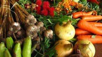 Z pole na vidličku – blízké výzvy pro evropské zemědělce a krajinu