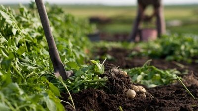 Zemědělství, lesnictví a vodní hospodářství